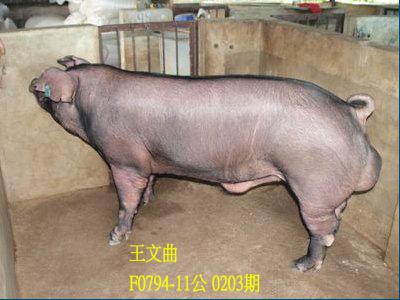 台灣動物科技研究所竹南檢定站10203期F0794-11拍賣相片