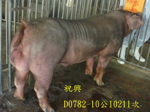 台灣區種豬產業協會10211期D0782-10側面相片