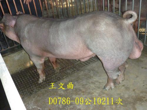 台灣區種豬產業協會10211期D0786-09側面相片