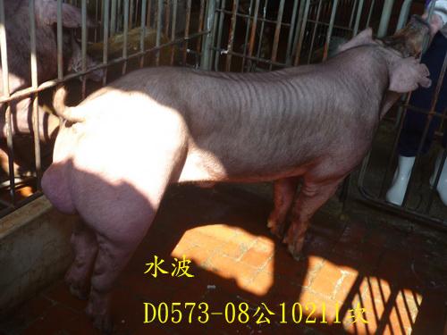 台灣區種豬產業協會10211期D0573-08側面相片