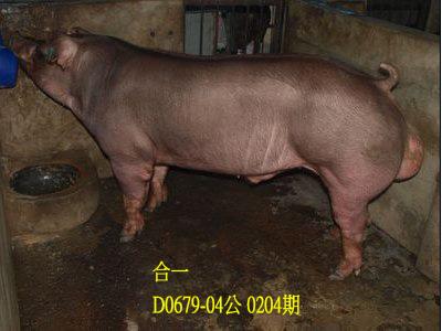 台灣動物科技研究所竹南檢定站10204期D0679-04拍賣相片
