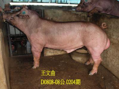 台灣動物科技研究所竹南檢定站10204期D0808-08拍賣相片