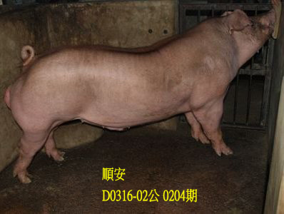 台灣動物科技研究所竹南檢定站10204期D0316-02拍賣相片