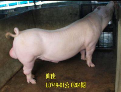 台灣動物科技研究所竹南檢定站10204期L0749-01拍賣相片