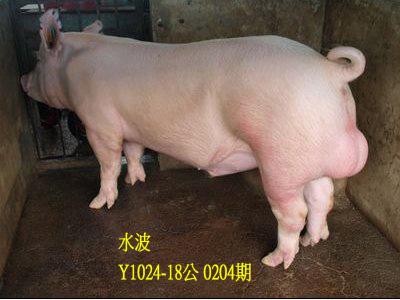 台灣動物科技研究所竹南檢定站10204期Y1024-18拍賣相片