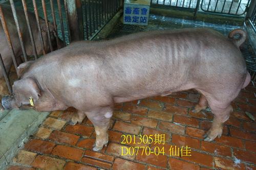 中央畜產會201305期D0770-04拍賣照片