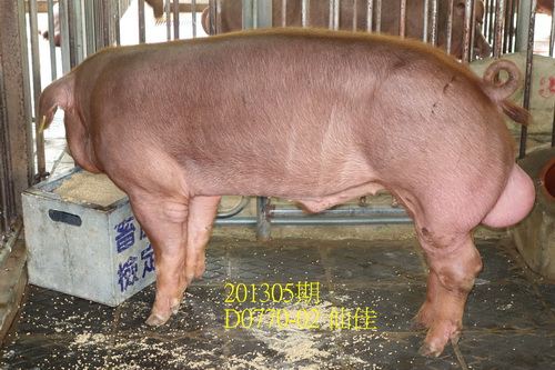 中央畜產會201305期D0770-02拍賣照片