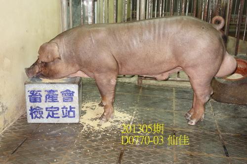 中央畜產會201305期D0770-03拍賣照片