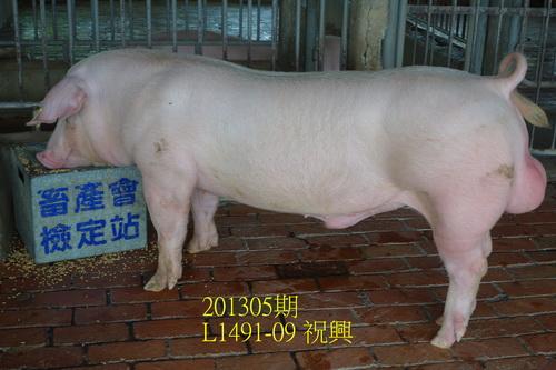 中央畜產會201305期L1491-09拍賣照片