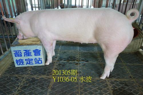 中央畜產會201305期Y1036-05拍賣照片