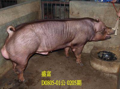 台灣動物科技研究所竹南檢定站10205期D0805-01拍賣相片