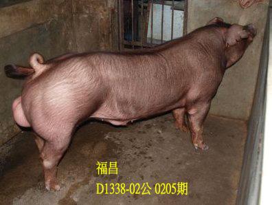 台灣動物科技研究所竹南檢定站10205期D1338-02拍賣相片