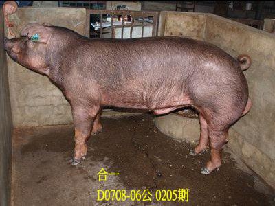 台灣動物科技研究所竹南檢定站10205期D0708-06拍賣相片