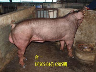 台灣動物科技研究所竹南檢定站10205期D0705-04拍賣相片