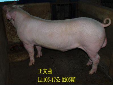 台灣動物科技研究所竹南檢定站10205期L1105-17拍賣相片