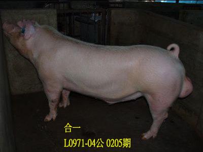 台灣動物科技研究所竹南檢定站10205期L0971-04拍賣相片