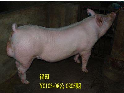 台灣動物科技研究所竹南檢定站10205期Y0103-08拍賣相片