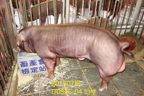 中央畜產會201307期D0826-04拍賣照片