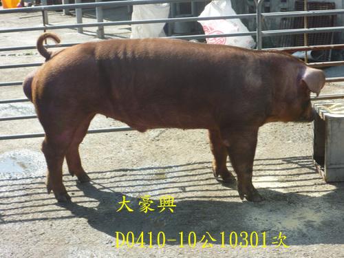 台灣區種豬產業協會10301期D0410-10側面相片