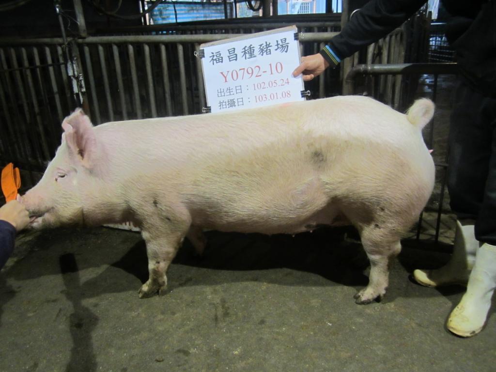台灣區種豬產業協會10301期Y0792-10側面相片