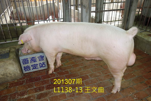 中央畜產會201307期L1138-13拍賣照片