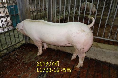 中央畜產會201307期L1723-12拍賣照片