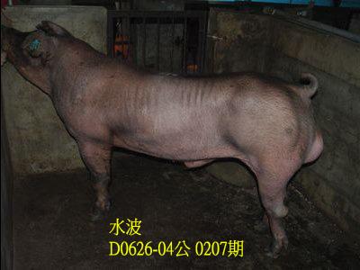 台灣動物科技研究所竹南檢定站10207期D0626-04拍賣相片