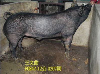台灣動物科技研究所竹南檢定站10207期F0847-12拍賣相片