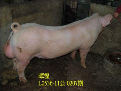 台灣動物科技研究所竹南檢定站10207期L0536-11拍賣相片