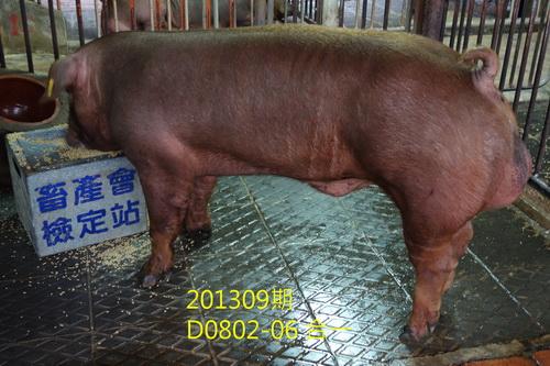 中央畜產會201309期D0802-06拍賣照片