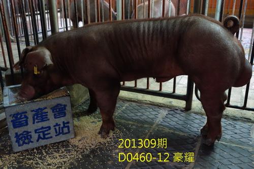 中央畜產會201309期D0460-12拍賣照片