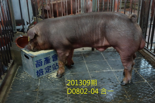中央畜產會201309期D0802-04拍賣照片