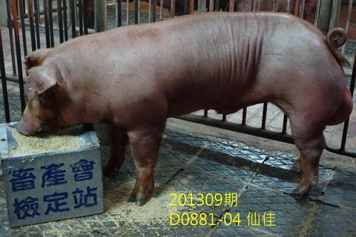 中央畜產會201309期D0881-04拍賣照片