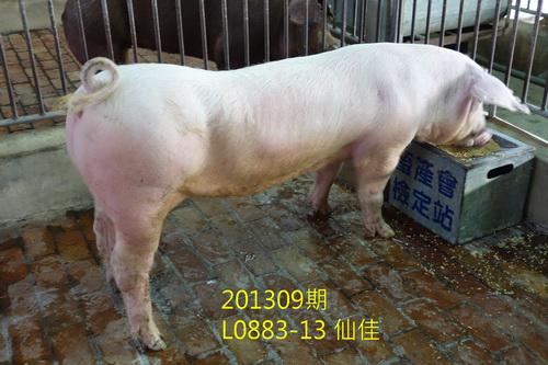 中央畜產會201309期L0883-13拍賣照片