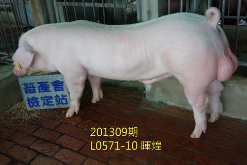 中央畜產會201309期L0571-10拍賣照片