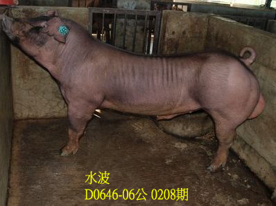 台灣動物科技研究所竹南檢定站10208期D0646-06拍賣相片
