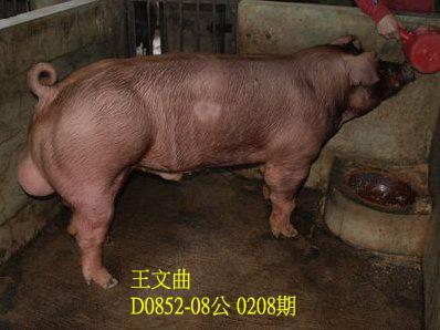 台灣動物科技研究所竹南檢定站10208期D0852-08拍賣相片