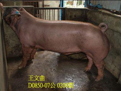 台灣動物科技研究所竹南檢定站10208期D0850-07拍賣相片