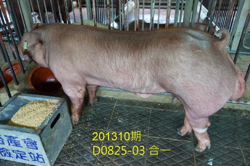 中央畜產會201310期D0825-03拍賣照片