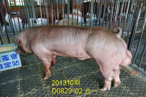 中央畜產會201310期D0829-02拍賣照片