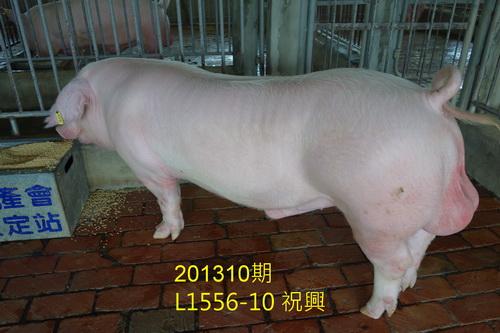 中央畜產會201310期L1556-10拍賣照片