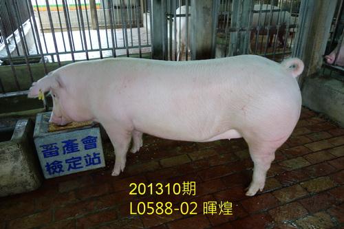 中央畜產會201310期L0588-02拍賣照片