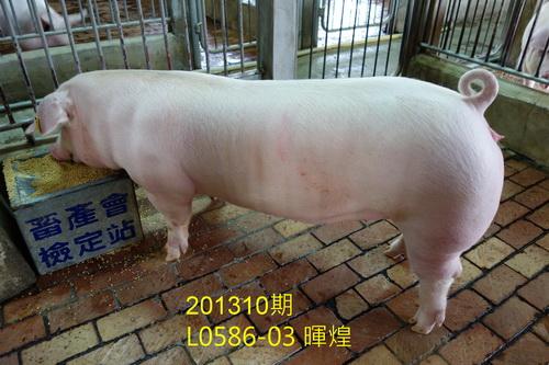 中央畜產會201310期L0586-03拍賣照片