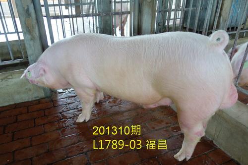 中央畜產會201310期L1789-03拍賣照片