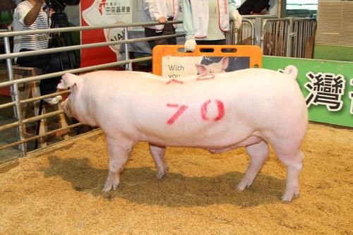 中央畜產會201310期L1789-01拍賣照片(高價豬)