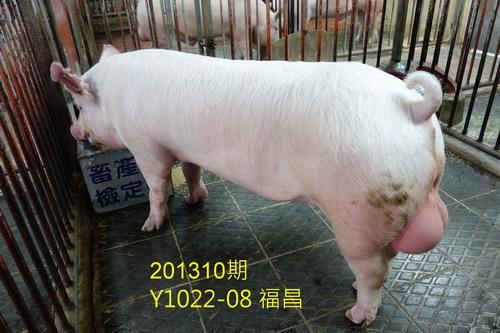 中央畜產會201310期Y1022-08拍賣照片