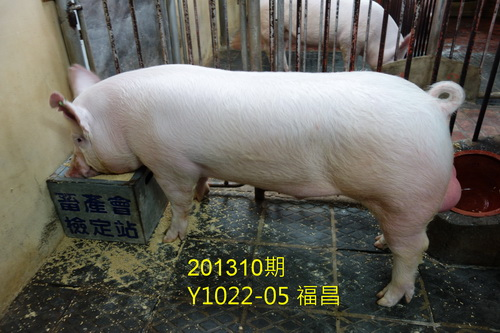 中央畜產會201310期Y1022-05拍賣照片