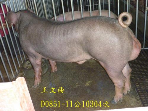 台灣區種豬產業協會10304期D0851-11側面相片