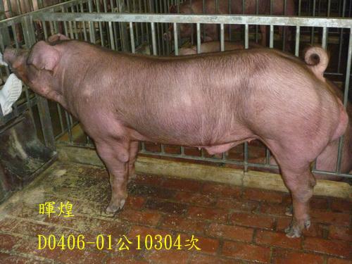台灣區種豬產業協會10304期D0406-01側面相片