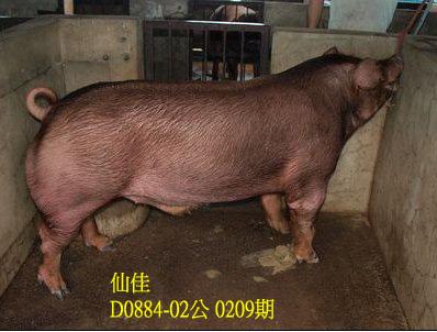 台灣動物科技研究所竹南檢定站10209期D0884-02拍賣相片